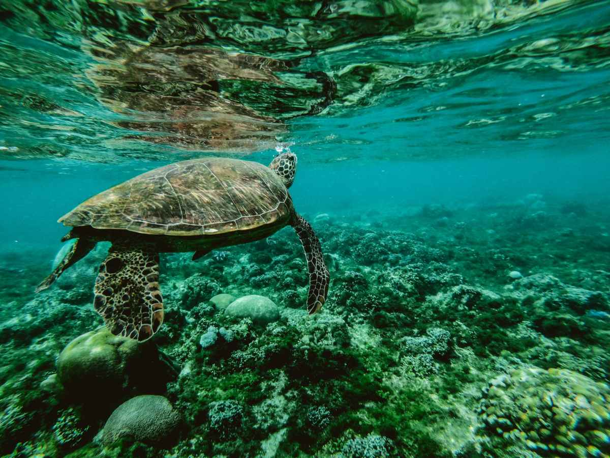 Life's Lessons from a Sea Turtle